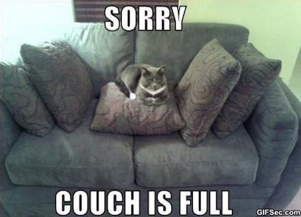 Egy macska egyedül elfoglalta a kanapét. Botrány!