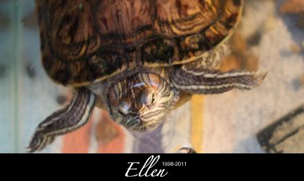 Ellen - 1998-2011