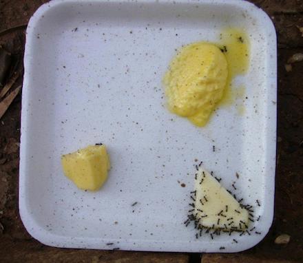 Hangya, margarin, vaj