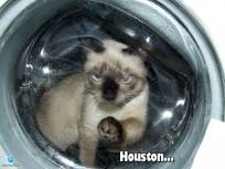 First Cat in Space - Az els� macska a vil�g�rben